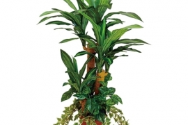 Palmipuu PL4