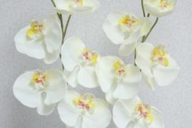 Phalaenopsis orhidee tundub loomulikuna ka katsudes h 75cm