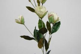 Magnoolia h 76cm