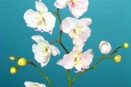Phalaenopsis orhidee h 91cm