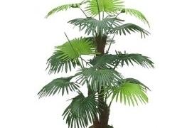 Palmipuu DL13