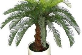Palmipuu DL2