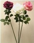 Roos valge h 81cm